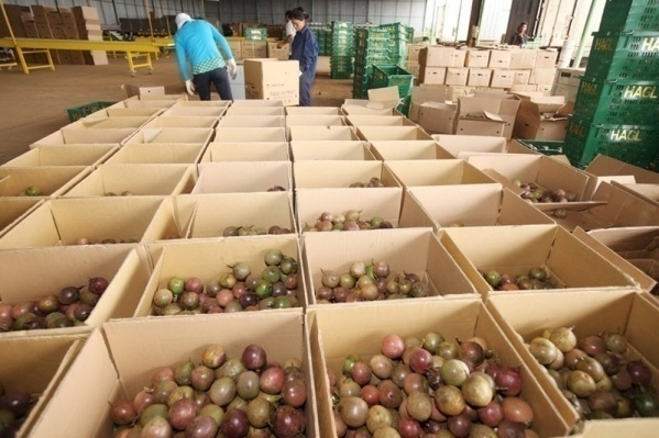 Tận dụng EVFTA, nông sản Việt liên tiếp lên đường sang EU